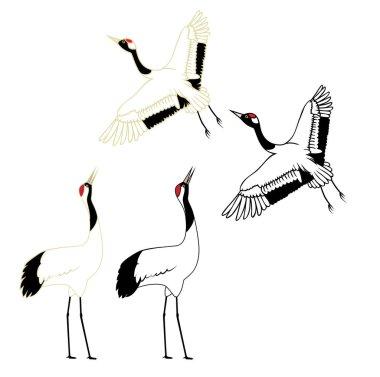 Illustration of red-crowned crane