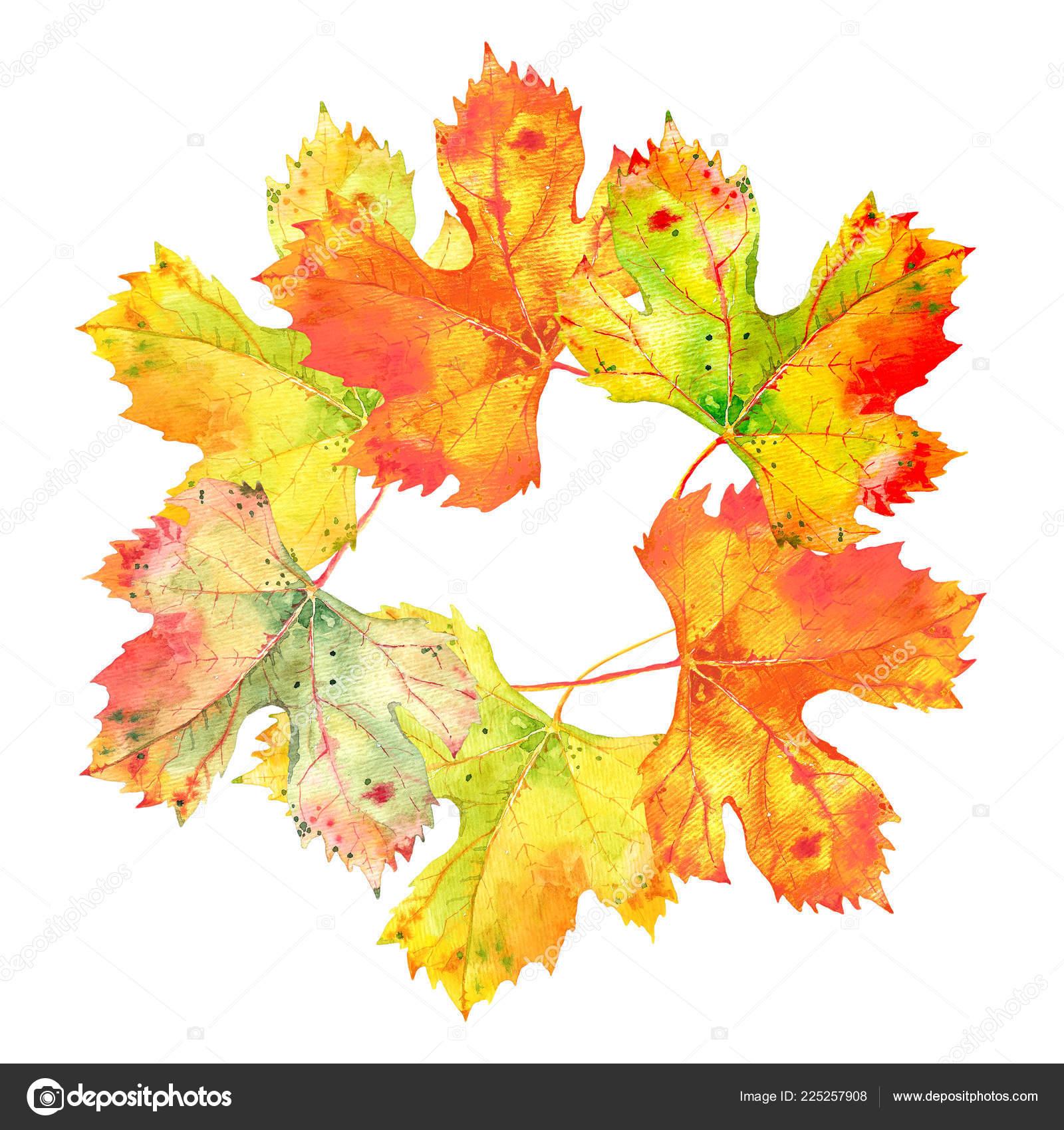 Pozadi S Podzimni Zlate Oranzove Hroznu Vinne Listy Sada Izolovane