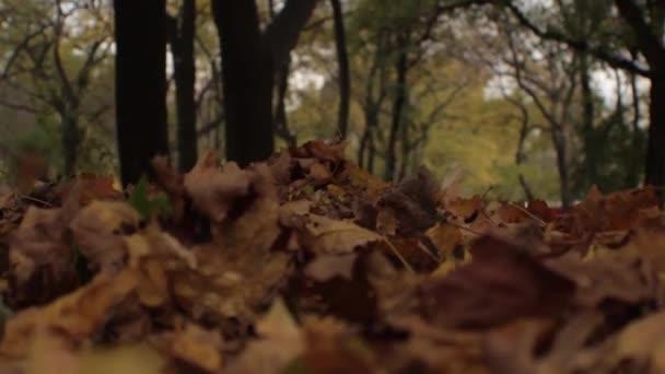 zwei Beinpaare gehen auf trockenes Herbstlaub