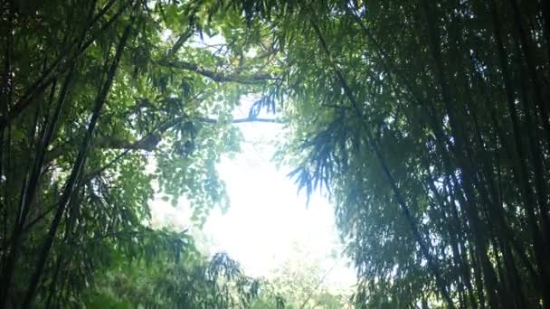 Natural frame formed by branches of leaning bamboo stalks