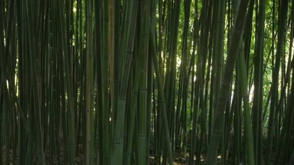 Background of green slender bamboo stalks with glimpses of light behind them