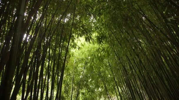 Šťavnaté zelené bambusové stonky žebřík nahoru a pokrytí oblohy