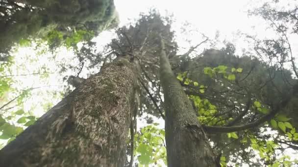 pohyb kamery po kmeni stromu dolů