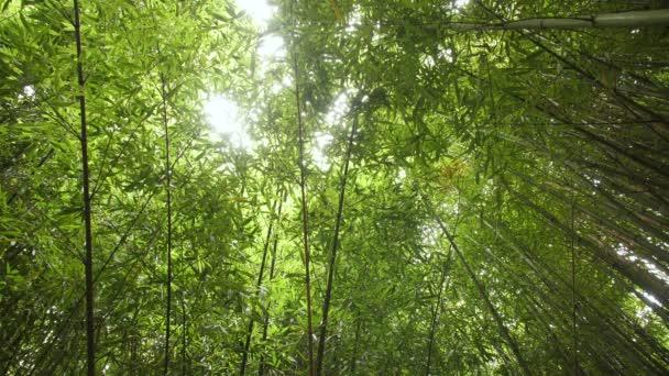 Tapeta s jasně zelené bambusového hájku na slunci