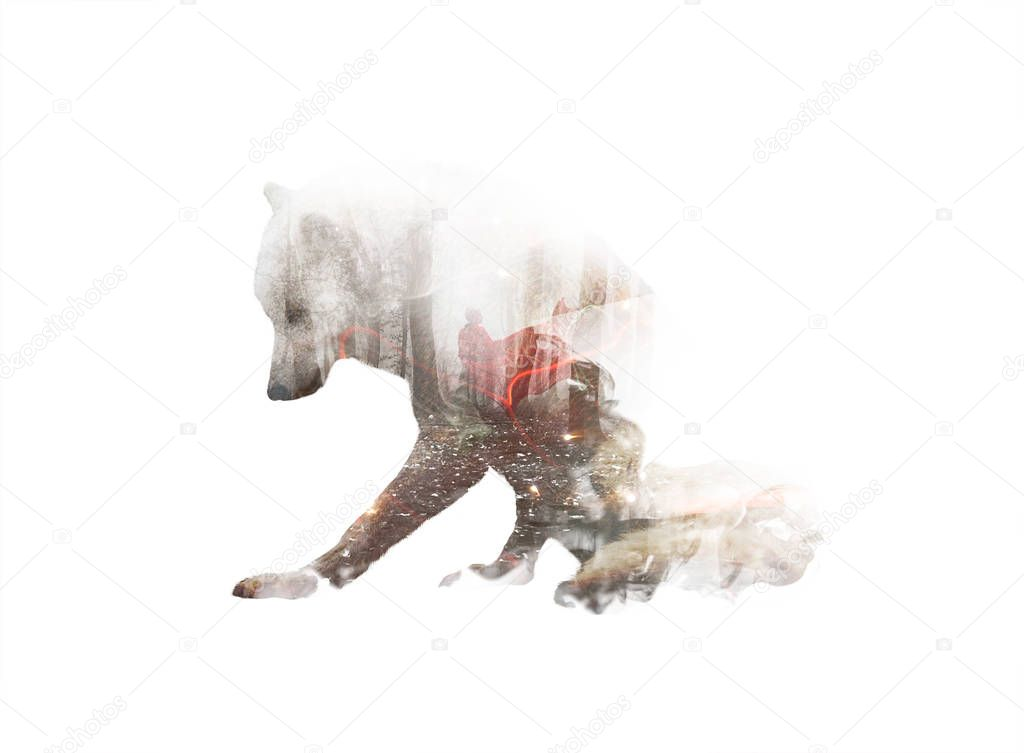 Double exposure of wolf silhouette with woman in red coat in mystical dramatic forest. Unity of human and nature. Fantasy book cover concept