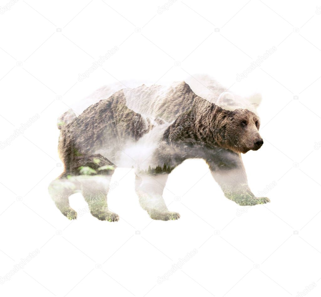 Double exposure of grizzly bear with wild mountains forest, animal with nature unity