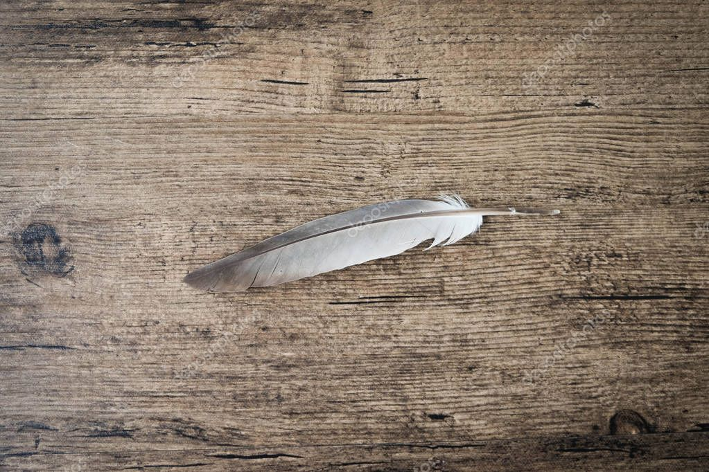 Feather on wooden table