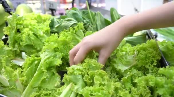 Žena, výběr salátů v supermarketu