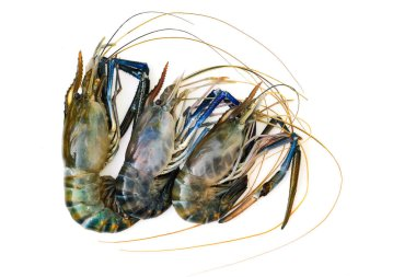 Image of fresh shrimp or lobster isolated on white background. Animal., Food.
