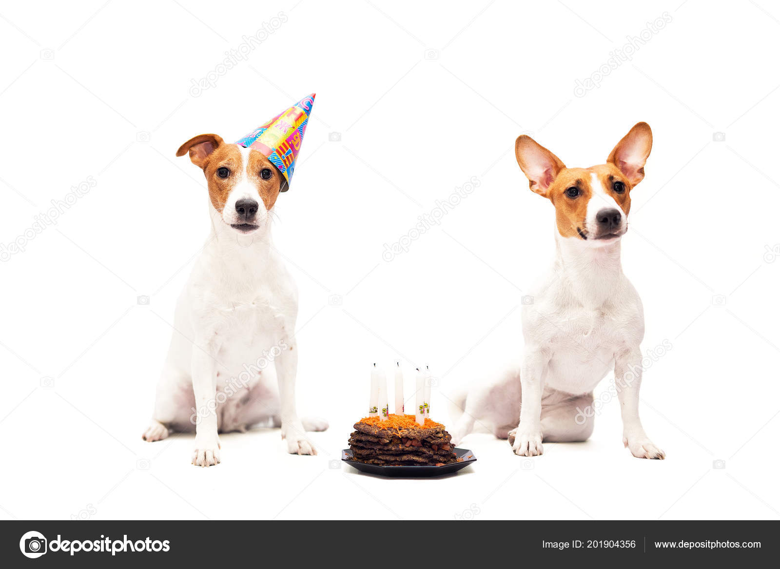 Cute Jack Russell Terrier Dogs Celebrating Happy Birthday Stock Photo