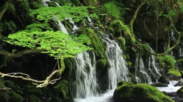 vodopád a mladé zelené Japonsko krajiny