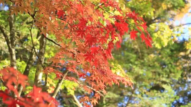 beautiful autumn leaf colors in japan