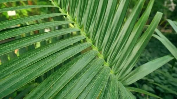 tropical green palm in thick forest
