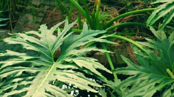 palm plant leaf in tropical climate. wet atmosphere in rainforest.