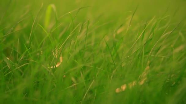 lédús növényzet nyáron