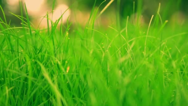 detailed shooting of green lawn
