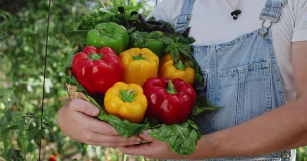 Oříznout pohled na bělocha držícího košík barevných paprik a zeleně, když stojí ve skleníku. Koncepce zemědělství a sklizně.