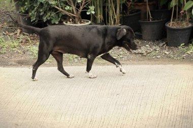 Roadside dog on ground
