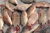 pesce fresco nel mercato