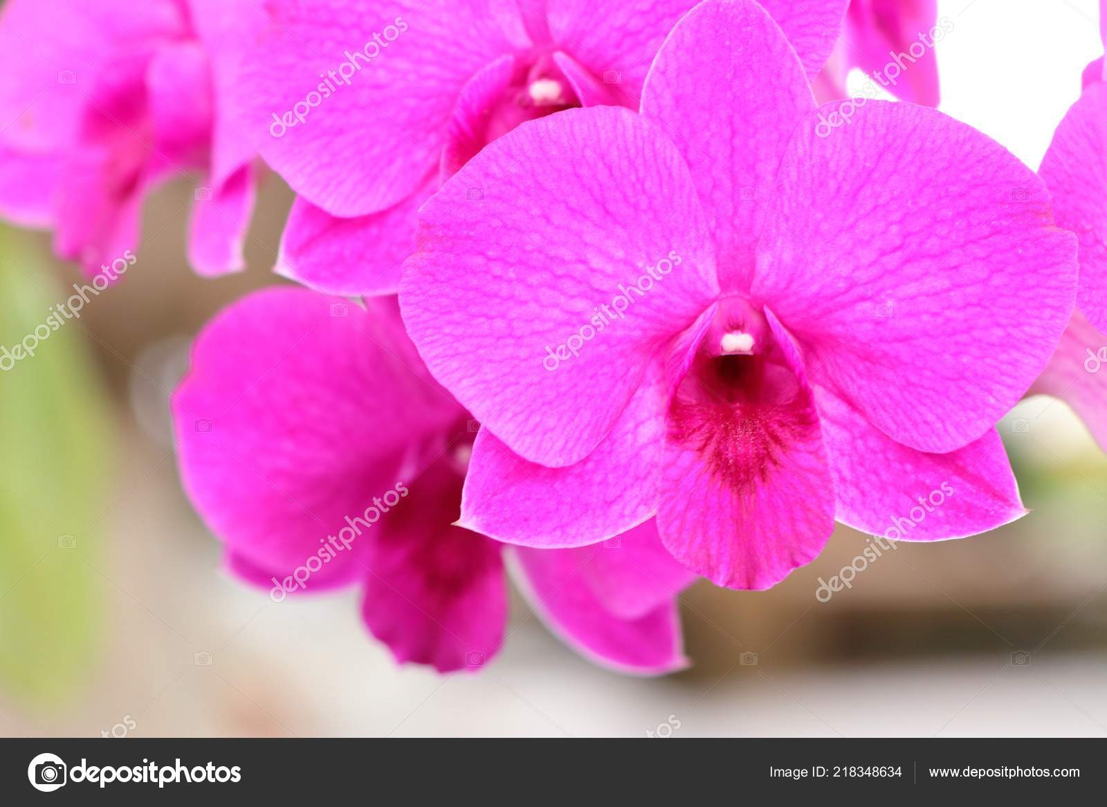 Fleur Orchidee Rose Tropical Photographie Oilslo C 218348634