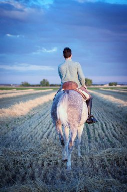 Horseback rider walking seen from the back, in the field on a straw stubble. Horse riding.