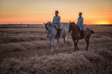 96/5000two riders on horseback seen sideways in the field on a straw stubble. Horse riding.
