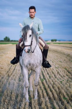 Horseback rider walking viewed from the front in the field on a straw stubble. Horse riding.