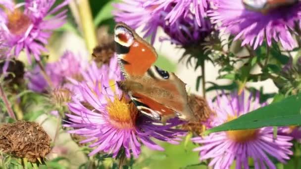 pillangó a nyári virág