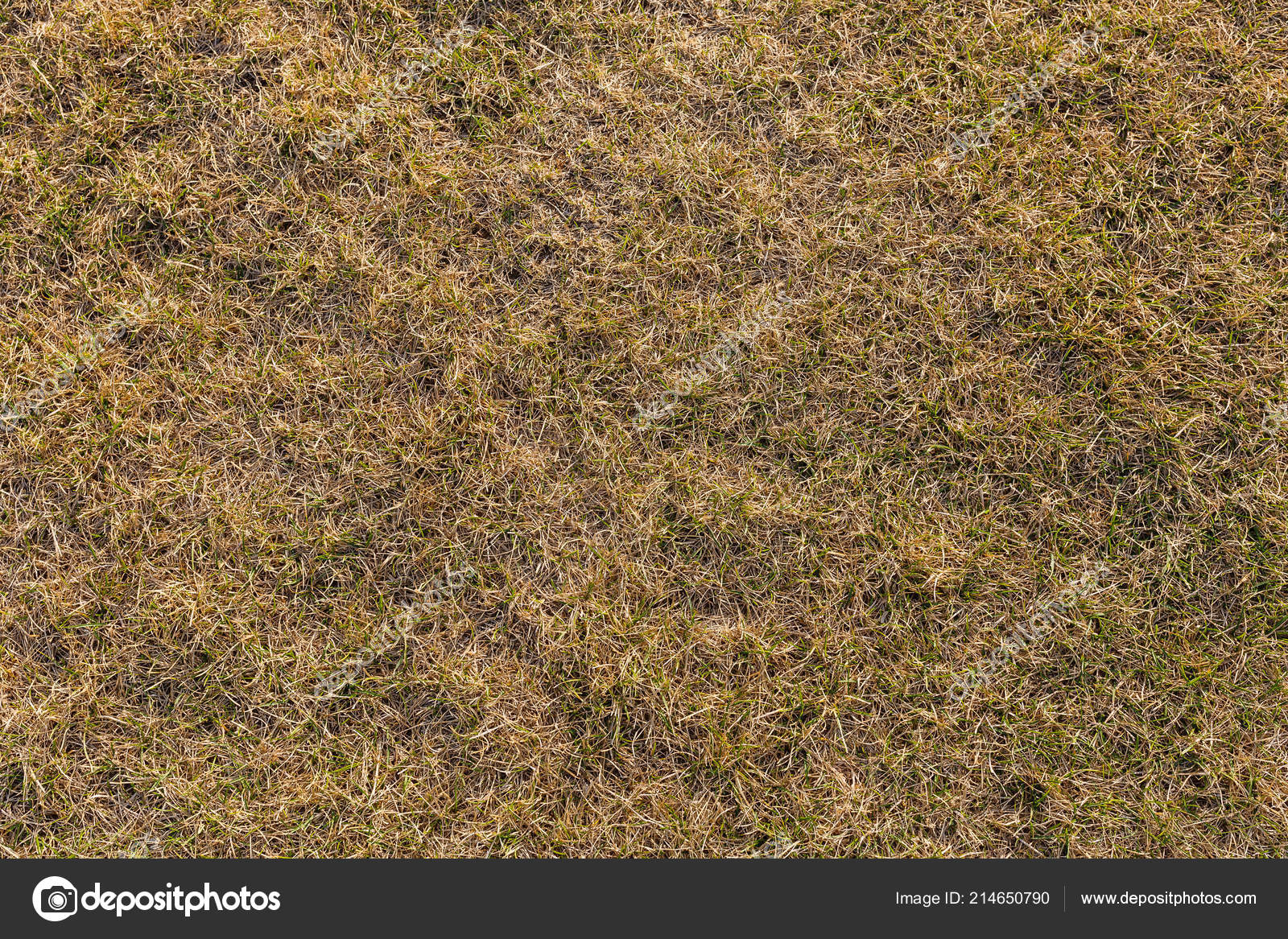 Ground Texture Dry Grass Small Rare Tufts Green Plants