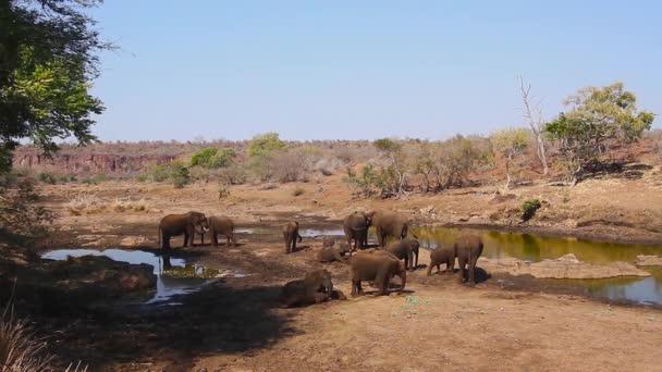 Sloní slon, jehož vodní díra se nachází v národním parku Kruger v Jižní Africe; Specie Loxodonta africana čeleď Eleantidae