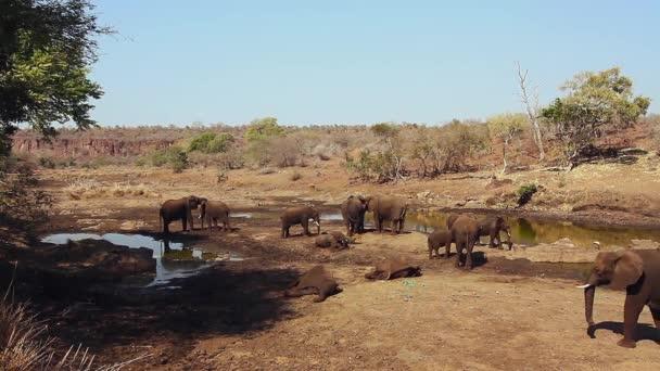 Mandria di elefanti africani vicino alla pozza dacqua nel parco nazionale Kruger, Sudafrica; Specie Loxodonta africanafamiglia di Elephantidae