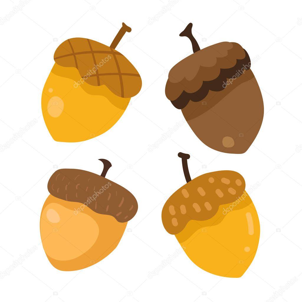 acorn vector collection design