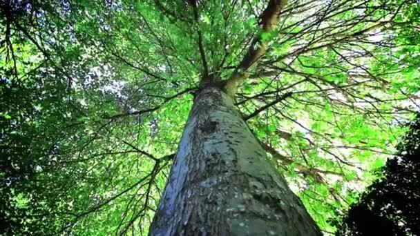 Baum aus nächster Nähe an einem Sommertag