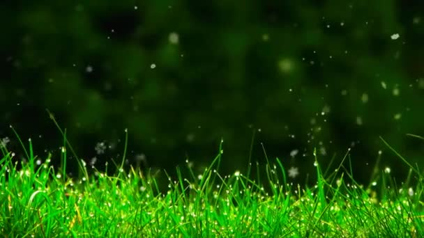 green grass closeup, nature