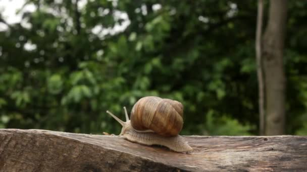 snail, summer, one, slow