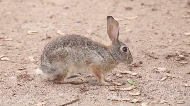 Nahaufnahme des Kaninchens von der Natur