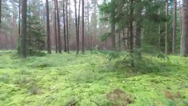 krásný zelený letní les