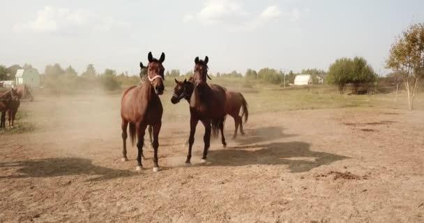 csorda ló a legeltetés a levade. ingyenes élő reakciók