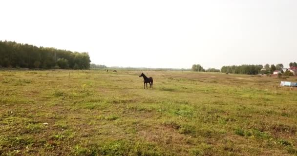 galloping horse in field