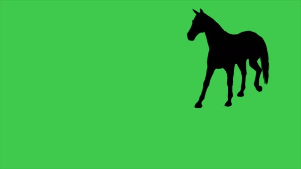 4K animation of Horse silhouette moving On green screen