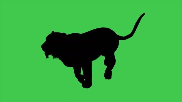 3D animáció a Panther Moving Silhouette-elválasztva zöld képernyőn