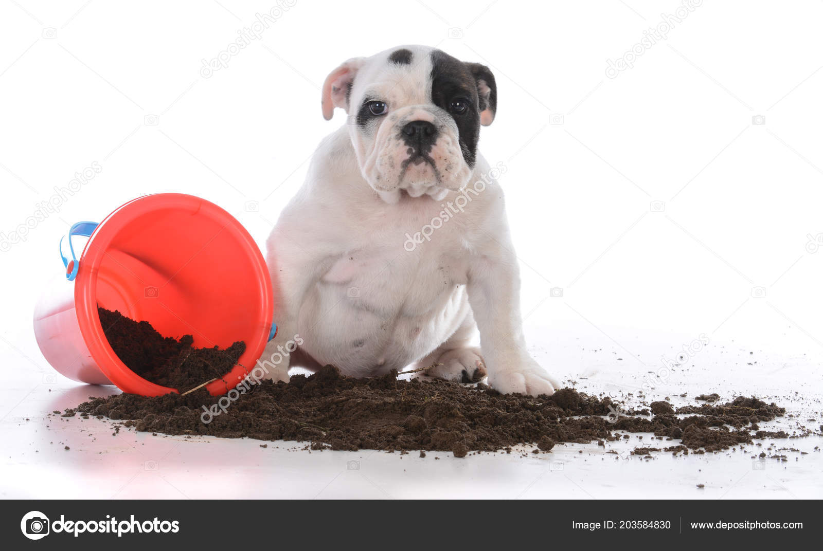 Dirty Dog Spielen Dreck Stockfoto Willeecole 203584830