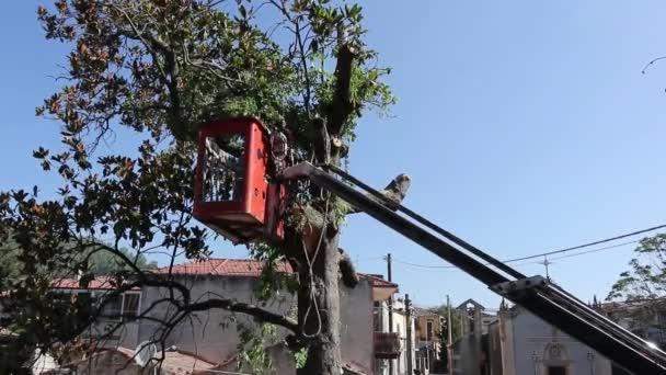 Strom prořezávání a řezání stromů s řetězovou pilou, stojící na plošině mechanického výtahu z křesla, na vysoké výšce mezi větvemi starého velkého Magnolia. Větve, trámy a piliny