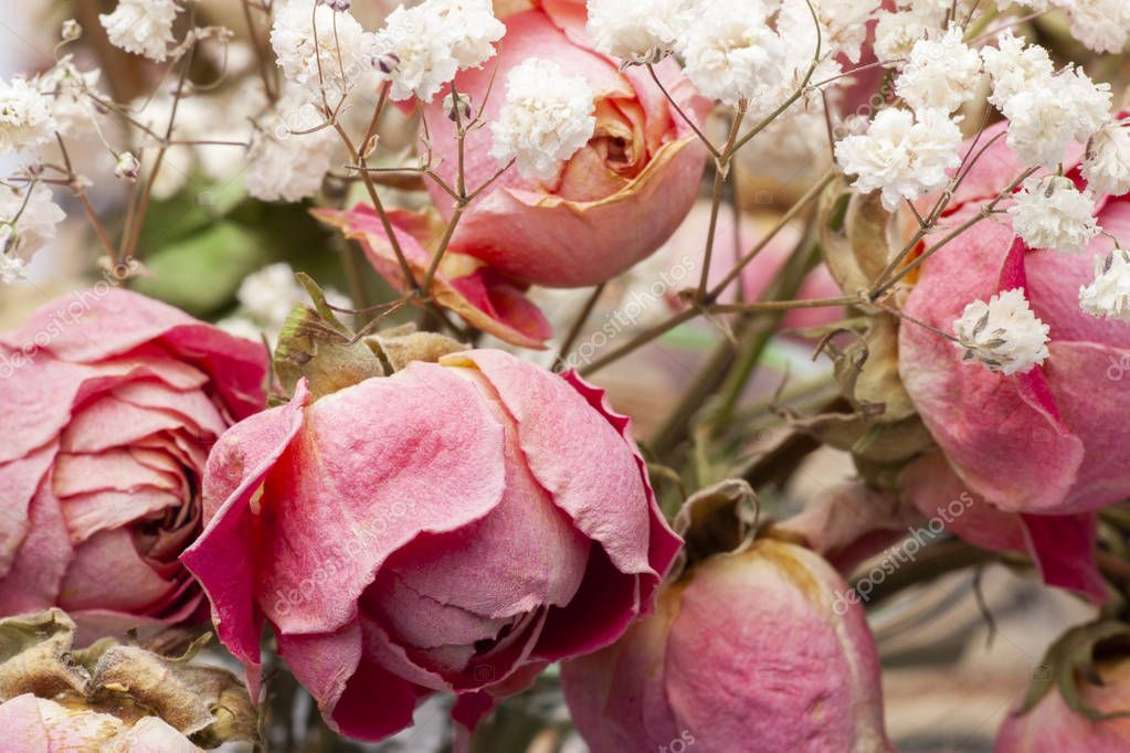 Roses dried flowers Interior decoration Limited depth of field