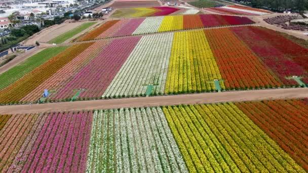 Letecký pohled na Karlovarský květ. v průběhu každoročního květu, který vede z března do poloviny května, si turisté mohou pochutnávat na kopcích barevných květin Giant Ranunculus. Karlovy Vary, Kalifornie, USA