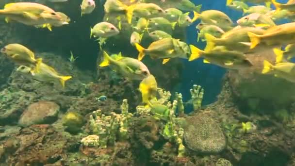 Big aquarium with lots of fishes swimming. Oceanarium with many different species of fish and coral.