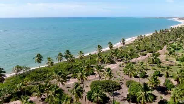 Légifelvételek a trópusi fehér homokos strand és a türkizkék kristálytiszta tengervíz, kis hullámok és pálmafák erdőben. Praia do Forte, Bahia, Brazília. Utazás trópusi koncepció