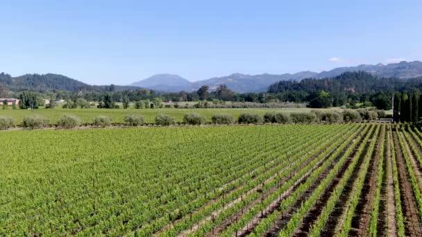 Letecký pohled na vinici v Napa Valley v letní sezóně. Napa County, v kalifornské vinařské zemi, části severní zátoky v oblasti sanfranciského zálivu. Vinice.