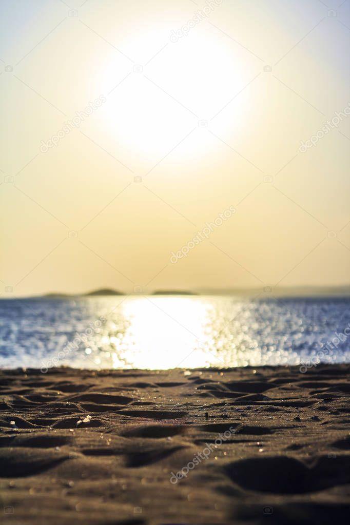 Landscape Beach in sunset, seashells on sand