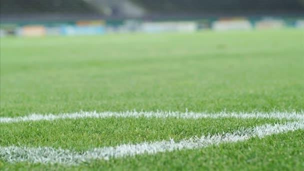 Dolly egy stadion közelében, a sarokban a focipálya